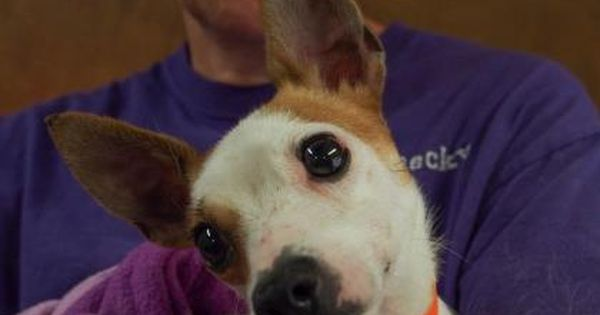 Adopt Ciera A Lovely 4 Years Dog Available For Adoption At