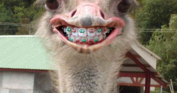 Community Post 14 Animals With Braces That Will Make You