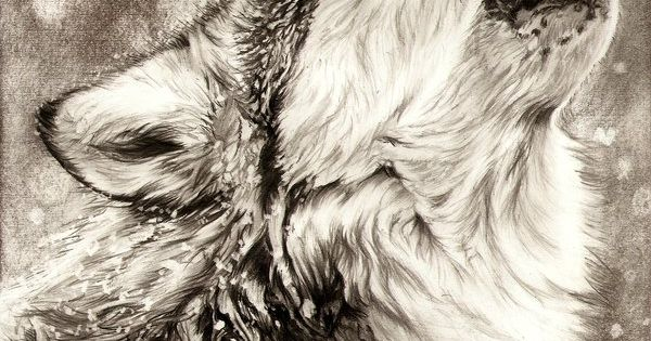 #animal pencil drawing wolf