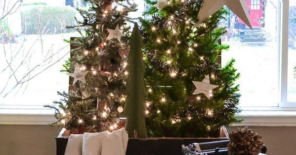 Christmas tree forest in a crate, with a star theme, via Christmas