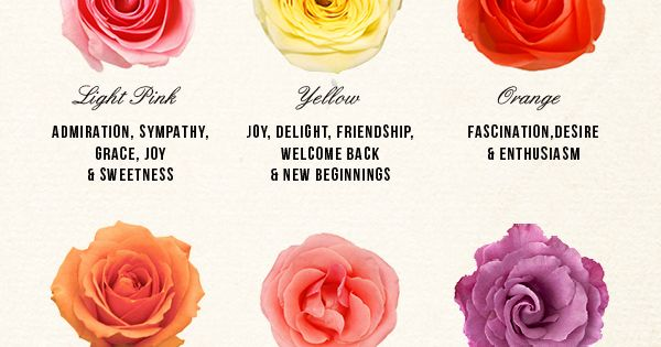 Rose color meanings DIY - a thoughtful bouquet of roses!