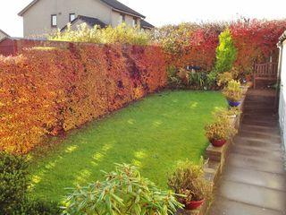 Jardin En Longueur Haie De Cotoneaster Amenagement Jardin