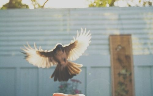 a bird in hand is worth two in the bush story What is a theme in this story a age is just a number b the joys of youth are fleeting c diamonds are a girl's best friend d a bird in the hand is worth two in the bush.