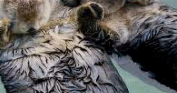 #Otters HoldHands DontLetGo Love Cute