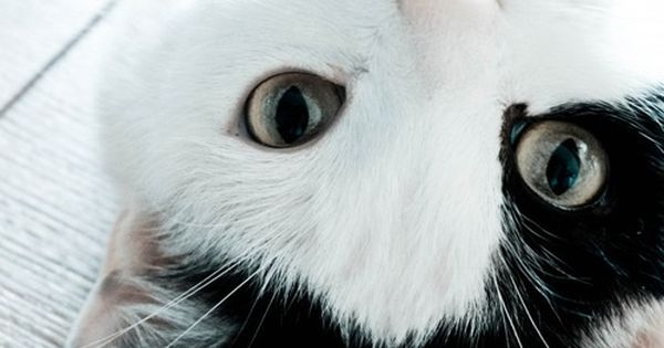 Vlack and white kitty cat