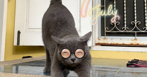 ป กพ นโดย Onlyforyoucloset ใน Cat