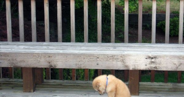 Oh how sad. Poor little puppy. Give him a BIG hug!