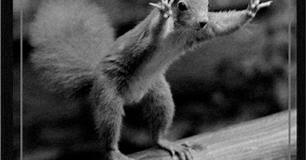 Funny animals... For the best funny animal quotes visit www.bestfunnyjokes4u.com/lol-funny-cat-pic/ This would