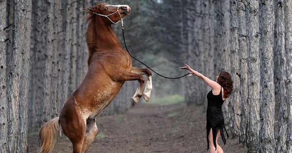 2 beauty photography horse and women