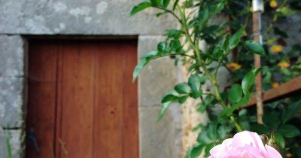 rose santana back ground marcilly en bassigny 2014. Black Bedroom Furniture Sets. Home Design Ideas