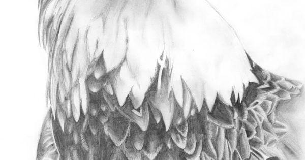 Pencil drawings bird pencil drawings dibujos for Koch zeichnen