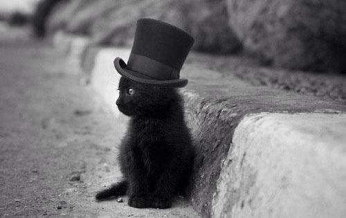 Gentleman kittycat