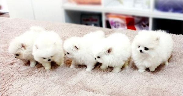 5 ADORABLE TEENY TINY BALLS OF FLUFF!!!!!!!!!!!!!!!!!