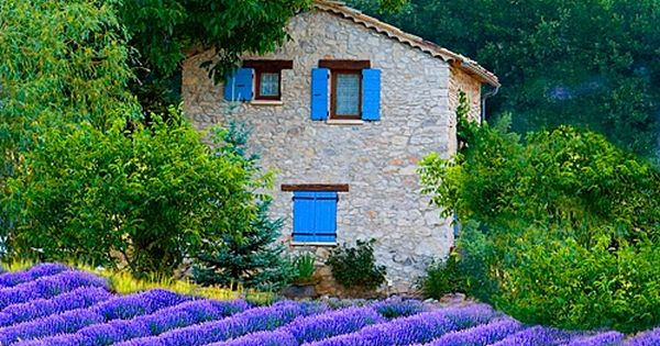 Lavender Fields, Sault, Provence, France. I love the blue shutters, too!