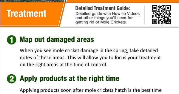 mole crickets how to get rid of them