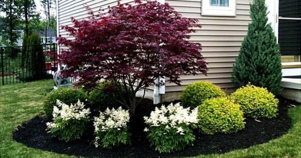 Use These Colorful Shrubs And Shrub Sized Trees To Offer Year Round Interest In Your Front Yard Front Yard Landscaping Design House Landscape Home Landscaping