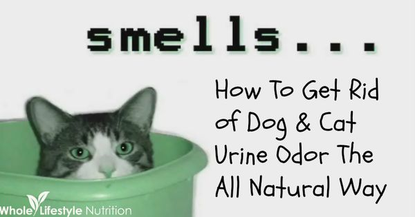 get rid of dog and cat urine odors the all natural way urine odor and cat urine. Black Bedroom Furniture Sets. Home Design Ideas