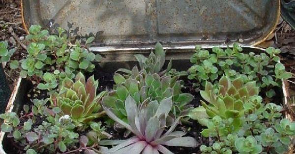 Oude koffer als plantenbak een leuk en origineel idee voor in de tuin je kunt je creativiteit - Origineel tuin idee ...