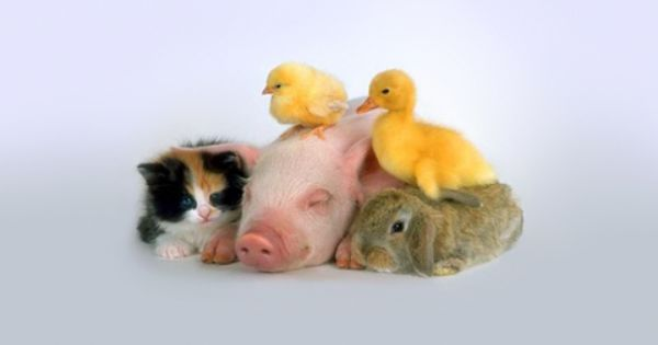 "Baby animals; The ""Farm"" Family"