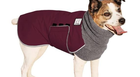 jack russell terrier winter jackets