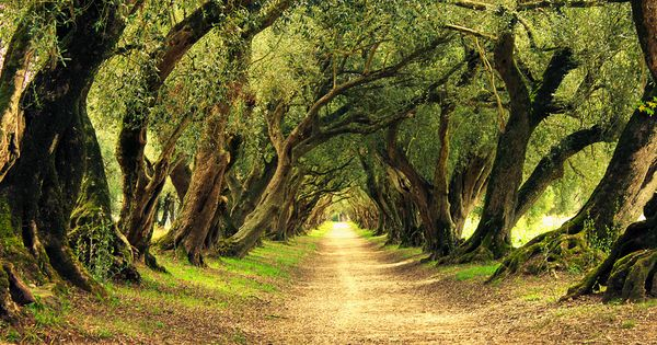 Beautiful path, beautiful trees. Untitled by Chus Nartallo, via 500px
