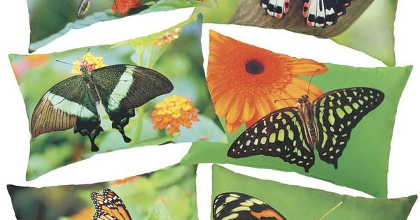 Indoor Outdoor Butterfly Photo Printed Pillows Are Vibrant