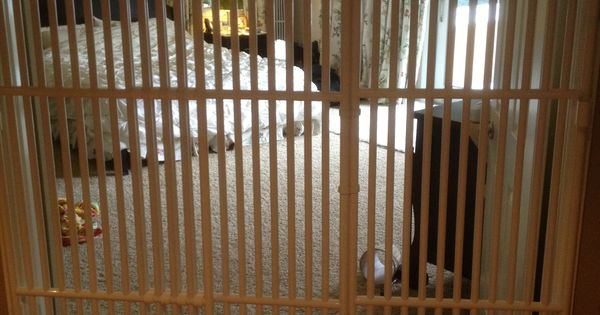 The Tallest Cat Gate In The World Pet Gates Pinterest