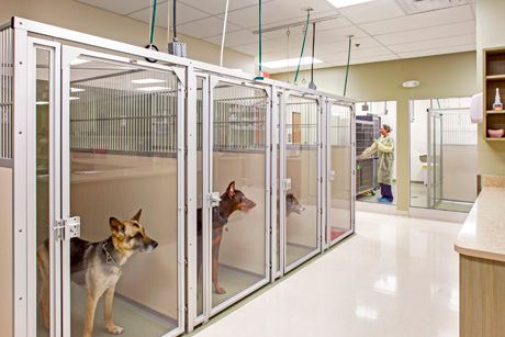 Icu Runs Hospital Design Hospital Design Dog Kennel Dog Park Design