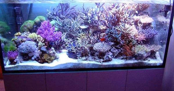 All about starting and maintaining salt water fish tank for Starting a saltwater fish tank