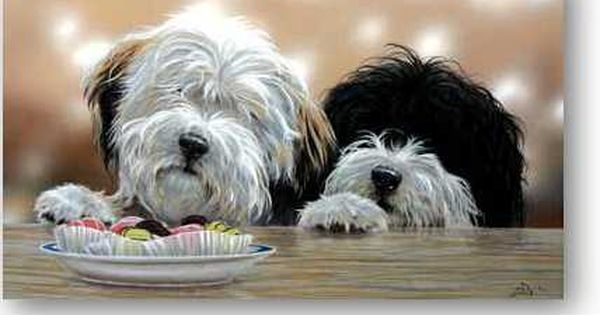 Different Dog Breeds Tibetan Terrier Cute Cats And Dogs Dog Breeds