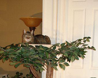 Bergahorn Katze Haustier Baumhaus Von Pettreehouses Auf Etsy Baumhaus Kratzbaum Natur Haustiere