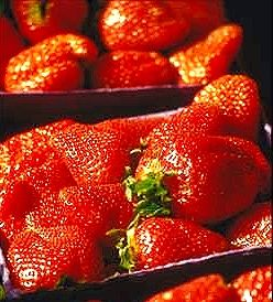 Mountain Valley Growers Albion Strawberries Our Day Neutral Ever Bearing Albion Strawberries Produce Smalle Gooseberry Plant Strawberry Plants Berry Plants