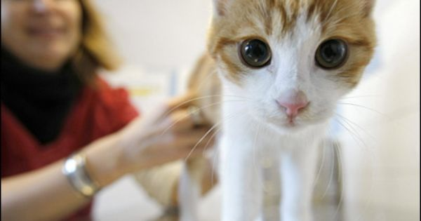 The Right Way To Give Your Cat Liquid Medication Cats Pet Hacks Beautiful Cats