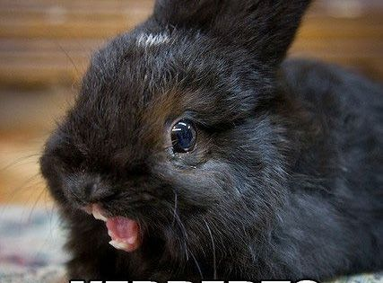 So funny bunnies can be violent when they see carrots apparently by