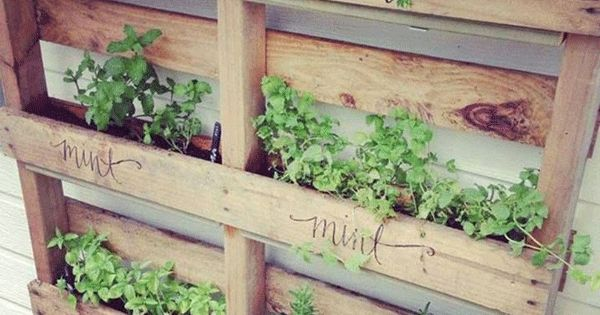 15 unusual vegetable garden ideas vegetable garden for Unique vegetable garden ideas