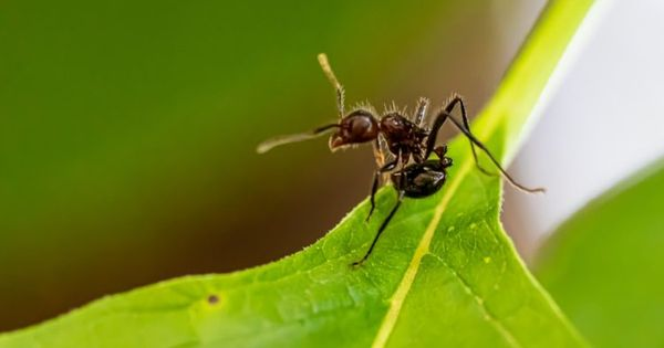 60c2b485e3bbd0e9629b9771d2ed3e38 - How To Get Rid Of Tiny Ants In Bathroom