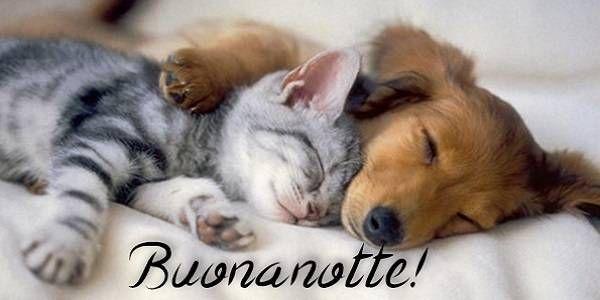 buonanotte co i cani - Ricerca Google   Funny animals, Cute animals, Funny  animal photos