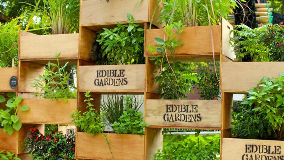 Who says you don't have any room for an herb garden. could