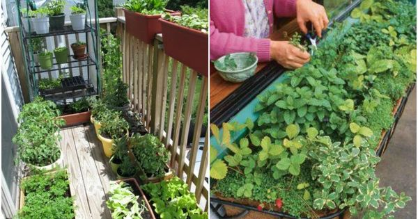 tips on starting a apartment garden