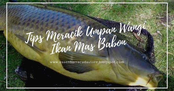 Pin Oleh Destykurniawati Di Aquatic Essen Babon Ikan Mas Ikan