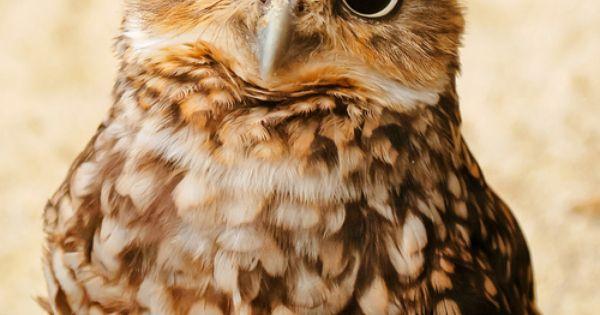 Owl baby!=)
