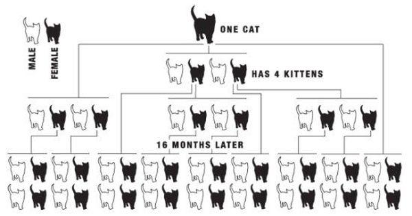 Animal Companion Overpopulation Animal Companions Neutering Dogs Cats