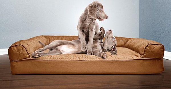 Furhaven Sofa Style Orthopedic Pet Dog Bed Mattress Orthopedic Pet Bed Dog Pet Beds Pet Sofa Bed