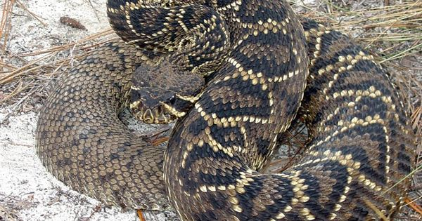 Snakes pictures dangerous snakes pictures - The World S Most Dangerous Snakes 32 Hq Photos Snake