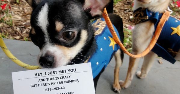 #Adopt Me, Maybe Business cards! Priceless! No puppy mills Rescue these cute