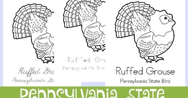 ruffed grouse coloring page - across the usa in 31 days pennsylvania grouse