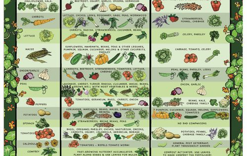 Companion Planting And Hows Your Garden Growing