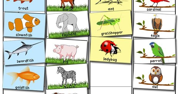 Animal Classification and Sorting Activity | Animal classification ...