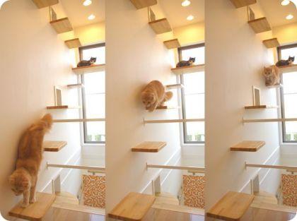 Casa Para Gatos Japon Casita Para Gatos Hotel Para Gatos