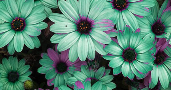 Turquoise and purple flowers amazing colorful